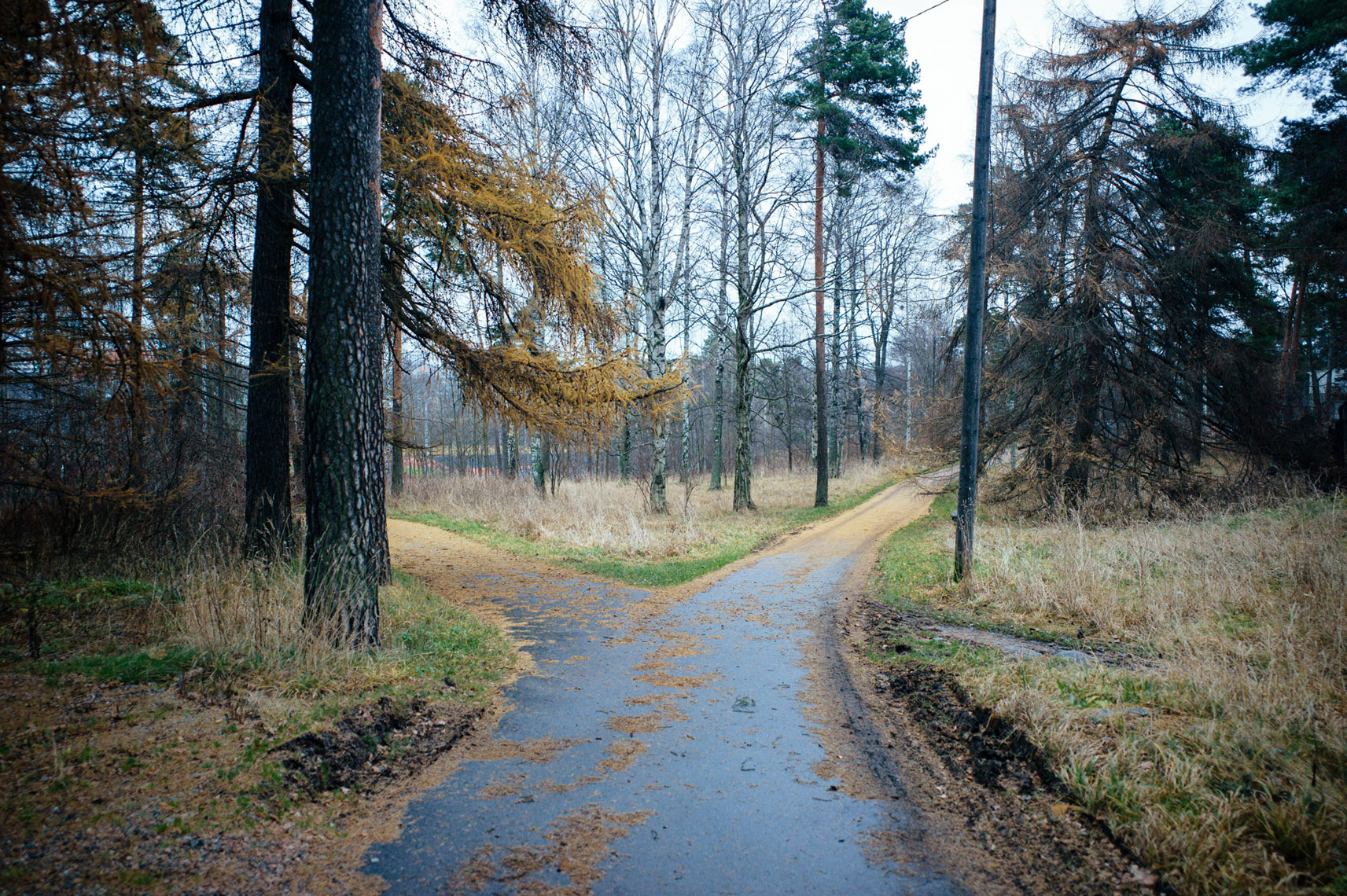 jon pack, photographer | the olympic city | helsinki, finland | woods